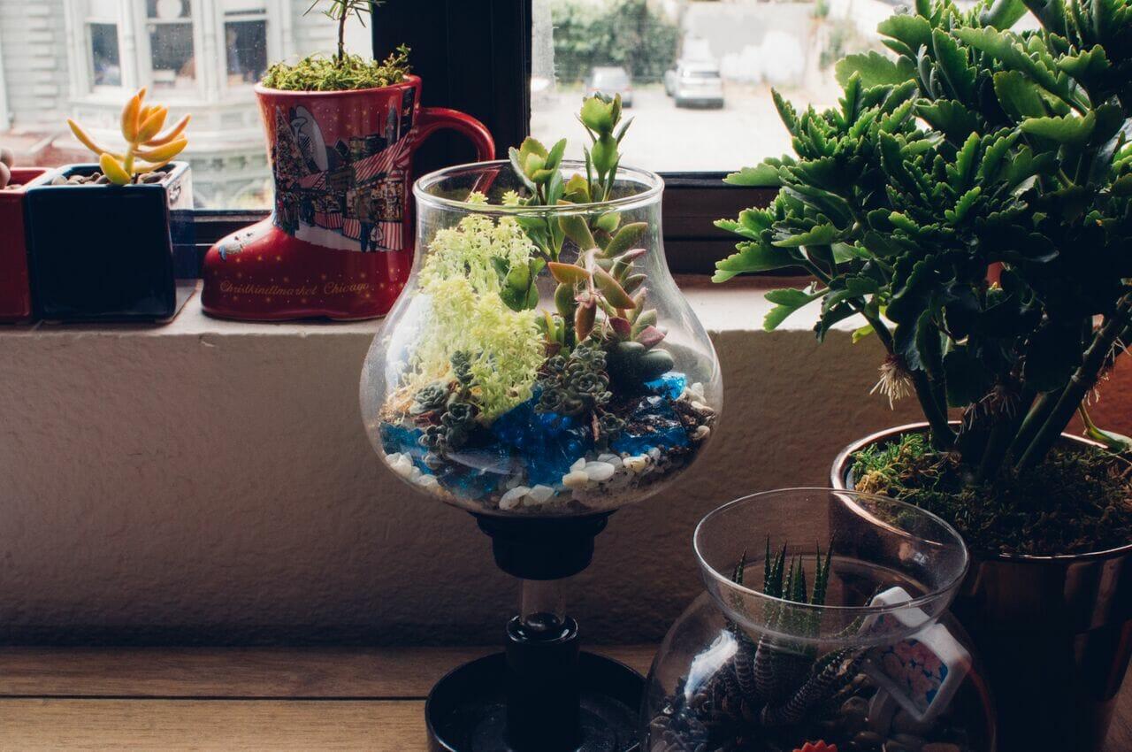 jenn-chen-plants-2
