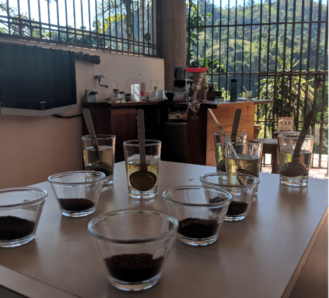 Coffee Cupping in Colombia