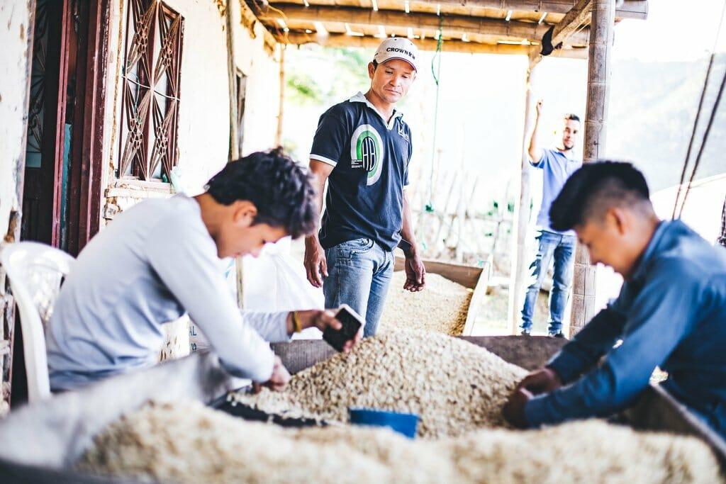 Colombian Coffee Farmers hand sorting green coffee