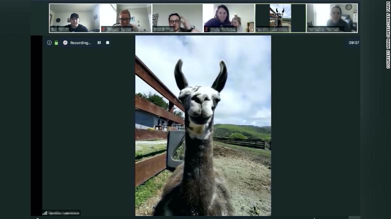 Invite a goat for brunch via zoom