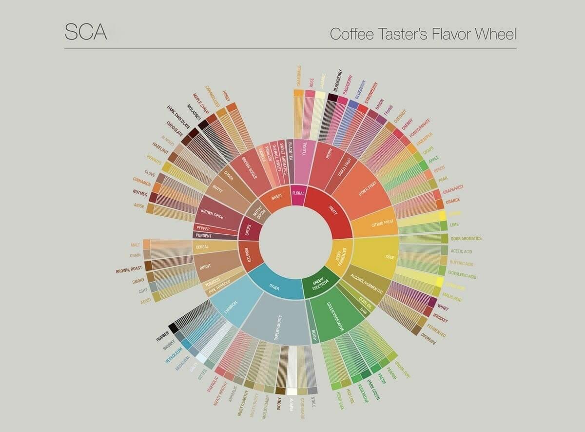SCA Coffee tasters flavor wheel