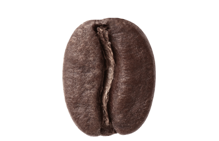 dark roast coffee bean