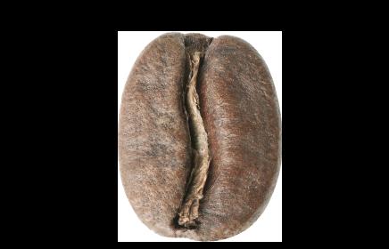 Medium roast coffee bean