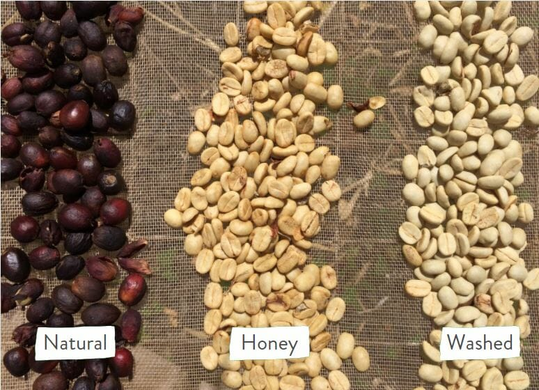Natural honey and washed process