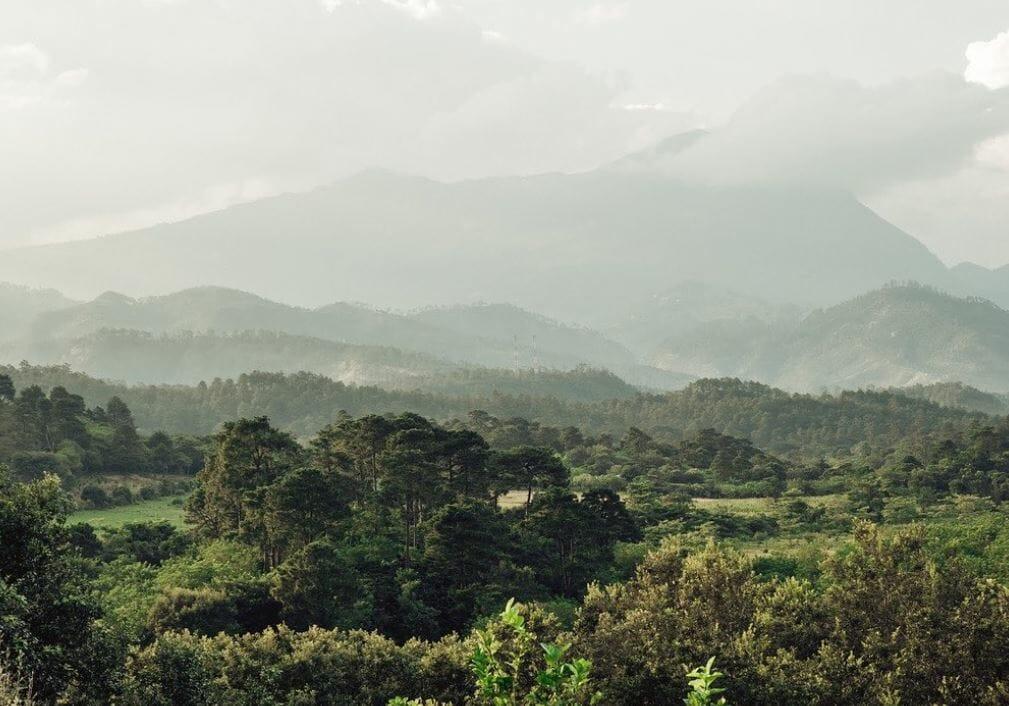 Beautiful view of Finca Terrerito, an Alma Family Farm in Honduras.