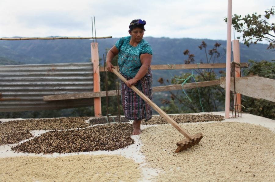 CODECH fair trade coffee