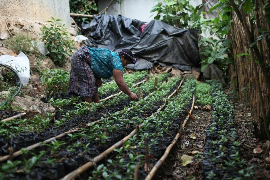 a Popti Mayan coffee grower in Guatemala